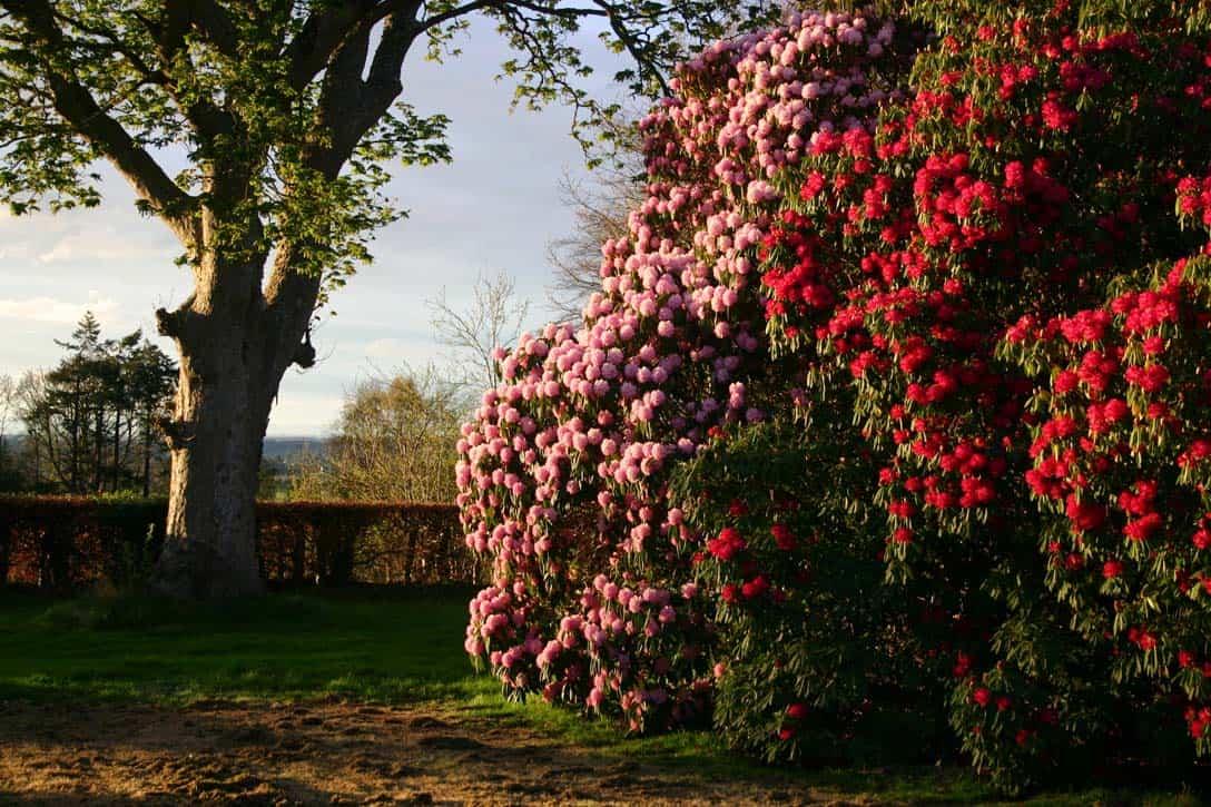 The gardens at Blackhills Estate, Moray.